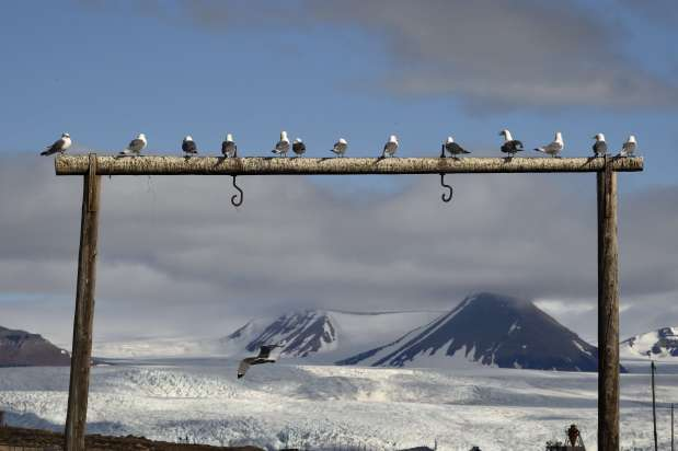 Adapt or die: Arctic animals cope with climate change