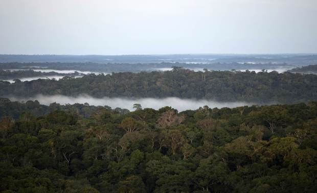 Earth is home to three trillion trees