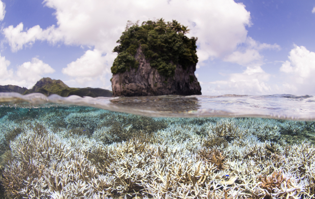 Scientists warn El Nino coral damage could be worst ever