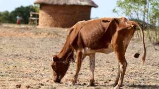 Drought-stricken Zimbabwe declares state of disaster
