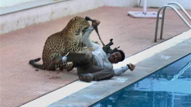 Leopard enters school in India, injures five