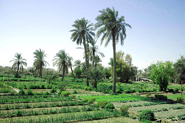 Bahrain ranks high in  food safety