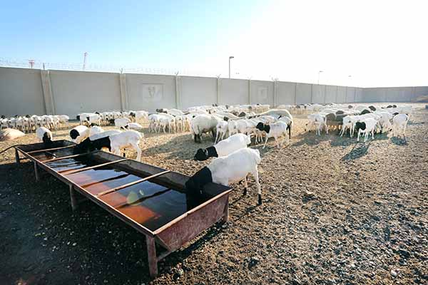 Barn owners refuse to move out of area near Bahrain airport
