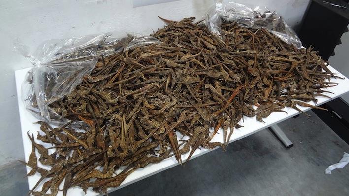 Thailand suspends seahorse trade