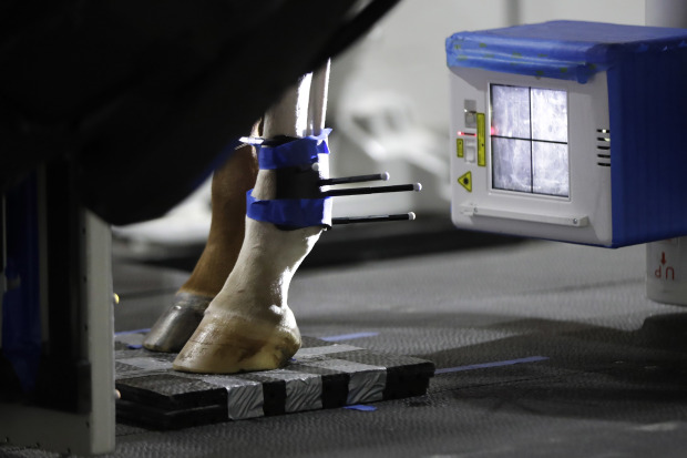 Robotic scan for horses could hold promise for human health
