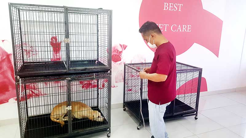 55 strays caught in new clamp