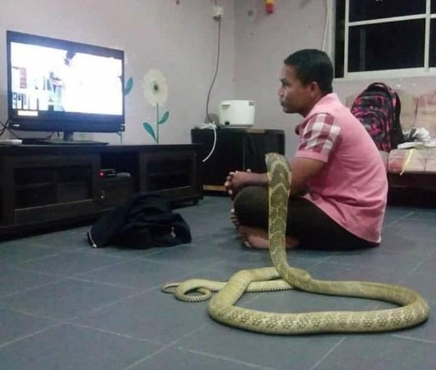 OMG: In Pictures: Man marries cobra he believes is his dead girlfriend