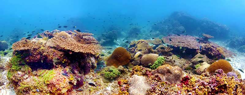 Expert calls for blueprint on coral reef research...