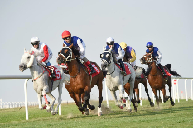 Al Tuwaisah tipped to win feature race