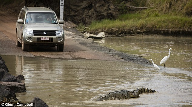 Australia: Man taken by crocodile while wading across river