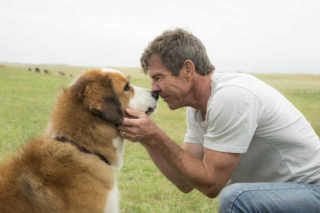 Animal treatment questions cancel 'A Dog's Purpose' premiere