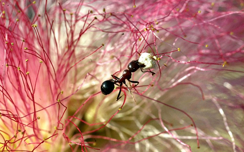 Revealed: What is it that makes ants such expert navigators?