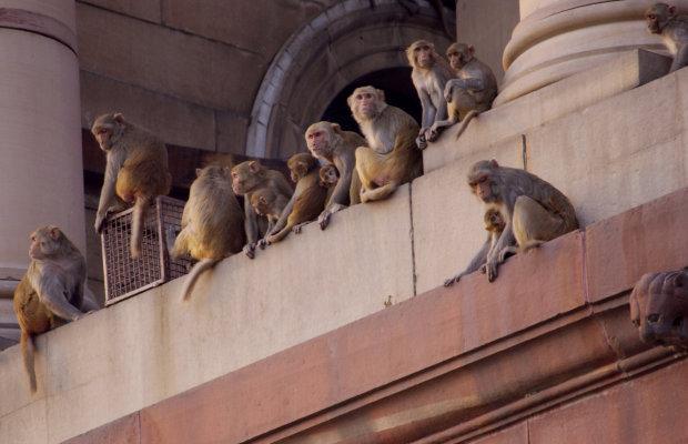 Gel alternative to vasectomy works in monkeys says study