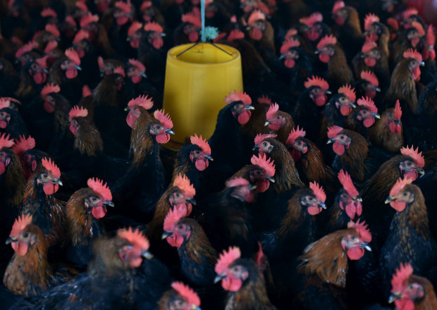 China closes live poultry markets amid deadly flu outbreak