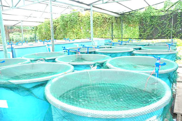 Help to be provided for Bahrainis starting fish farming at home