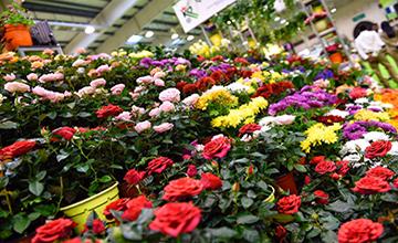 Garden show success hailed