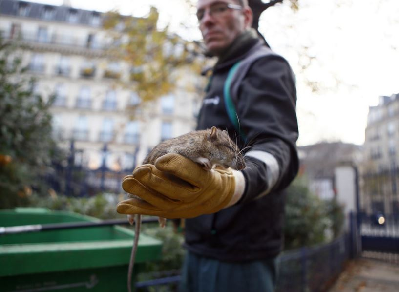 Paris mayor to spend 1.5 million euros for 'war on rats'