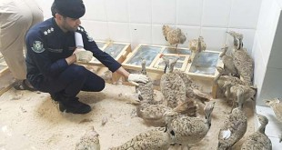 Saudi bans import of live birds from Spain