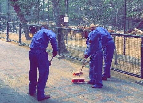 Trio ordered to clean Dubai zoo daily for 3 months over cat killing video