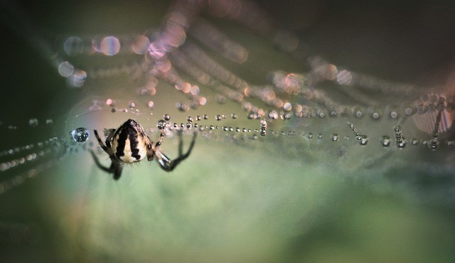 Spider venom may offer hope to stroke victims say scientists