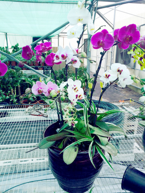 Weekly flowers expo to be held
