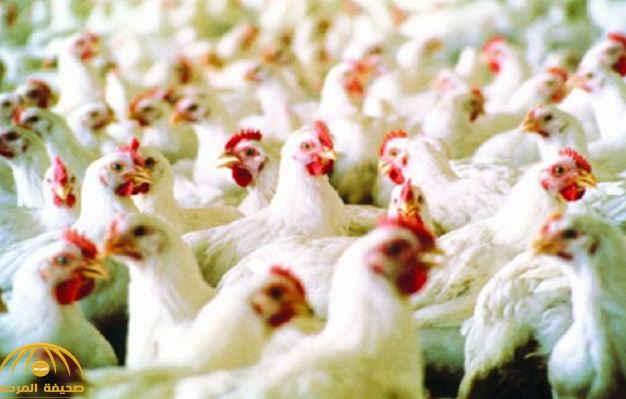 Saudi suspends imports of Brazilian meat, poultry