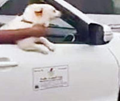 Ministry employee faces action after getting filmed with dog in service car