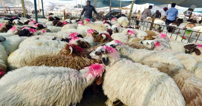 Saudi lifts ban on import of livestock from Kuwait