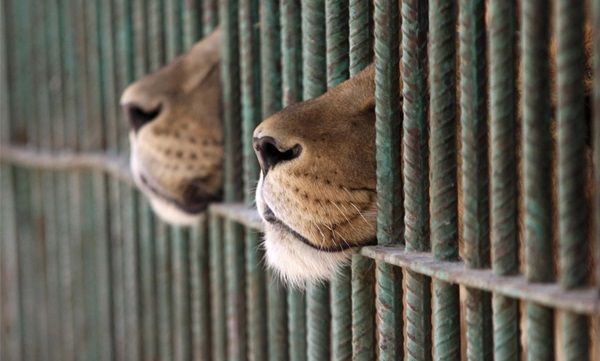 Dubai bans trade of wild animals