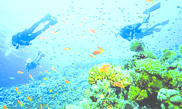 Step up marine life protection