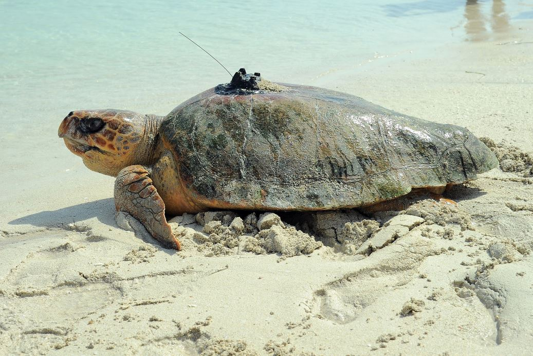 IN PHOTOS: 50 turtles released to mark Endangered Species Day