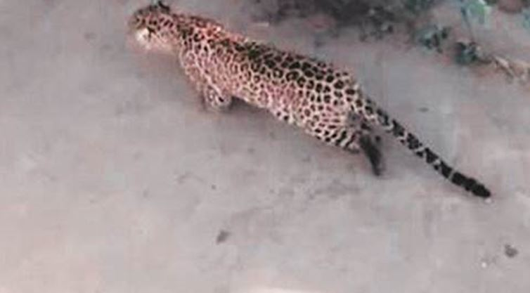 Seven-year-old boy killed by leopard in Indian village