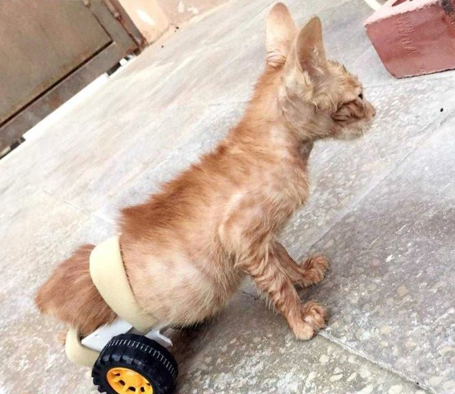 Video: Saudi who helped paralysed cat touches hearts