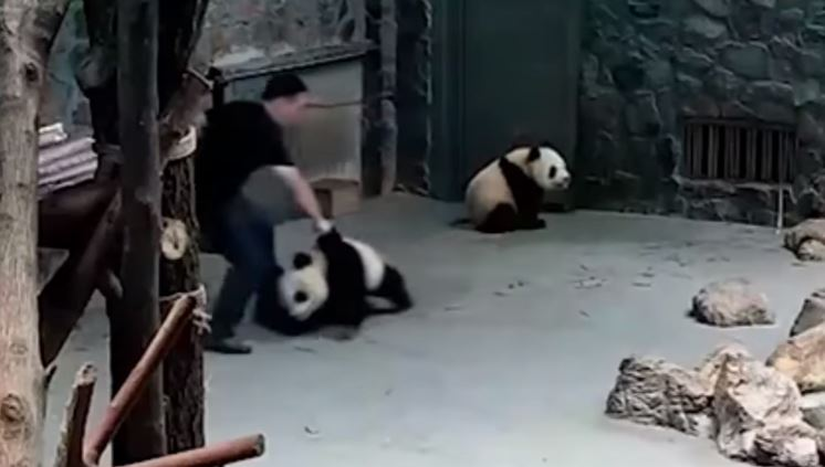 China outrage over 'panda abuse' video