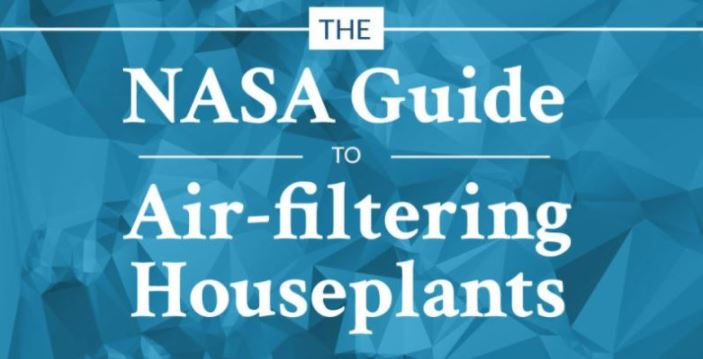 These are best air-cleaning plants for your home