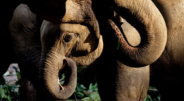 Elephant kills Argentine hunter in Namibia