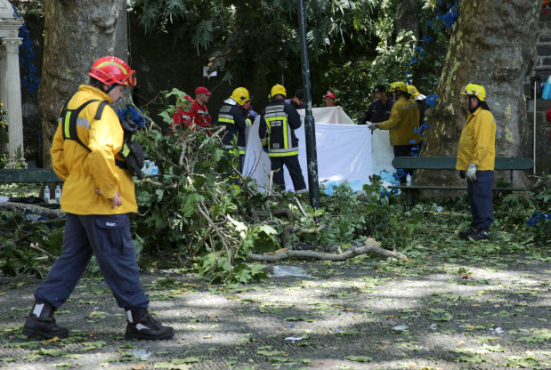 Falling tree kills 13 at Portugal religious festival