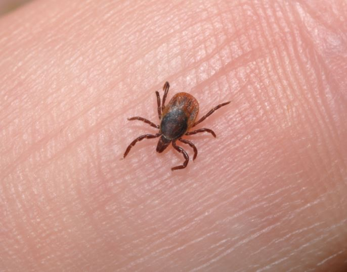 Is it really Lyme? Researchers developing a new test to tell