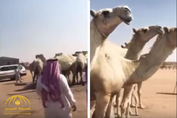 Camel sold for SR1.3 million at Saudi auction