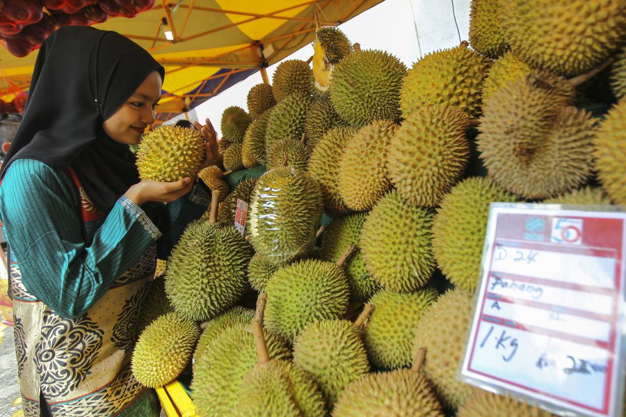 Scientists reveal secrets of famously pungent durian fruit