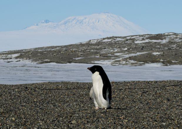 Thousands of penguin chicks starve in Antarctica
