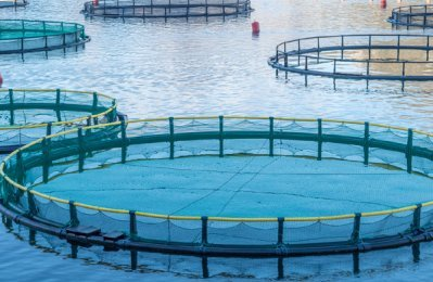 Qatar launches first private sector fish farming project