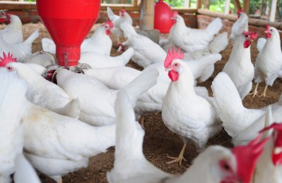 Al Namaa Poultry to float tender for $259m project