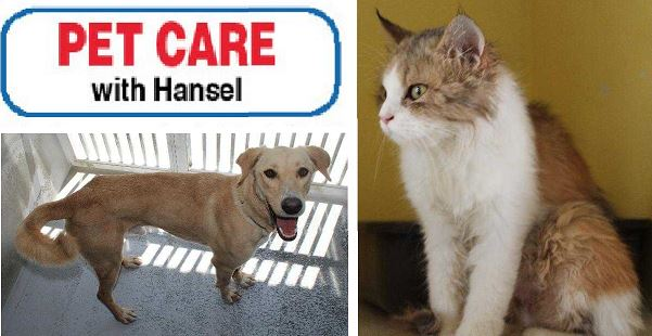 Pet Care with Hansel