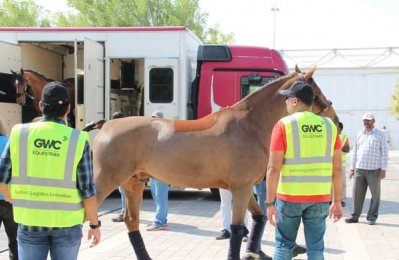 GWC delivers equestrian logistics for Doha event
