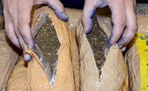 Two Asians caught with 14kg of marijuana