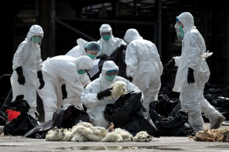 South Korea confirms H5N6 bird flu at duck farm
