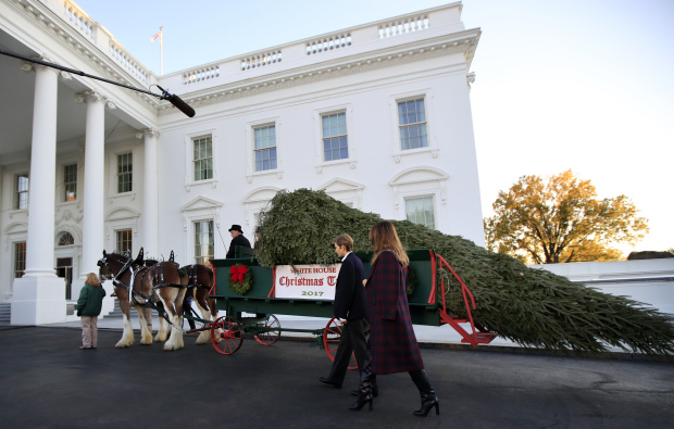 World News: In Pictures: Melania Trump and Barron receive White House Christmas tree