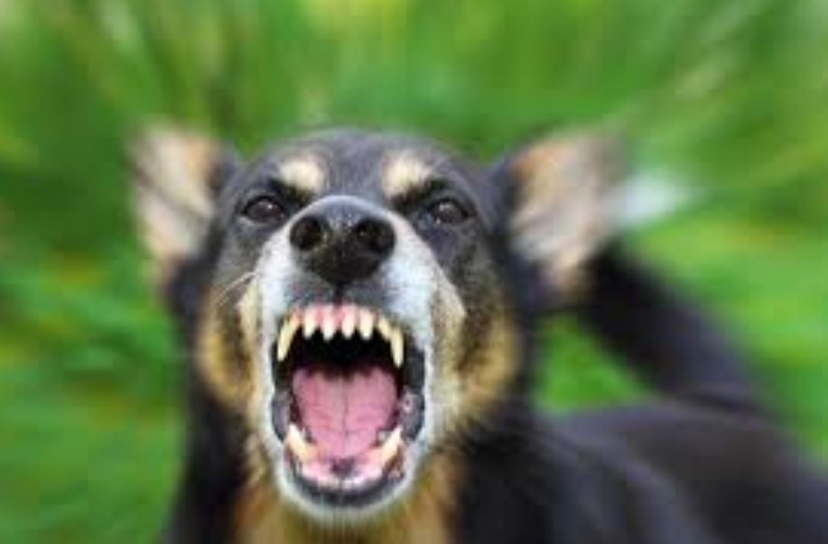 GDN Reader's View: Risks of rabies