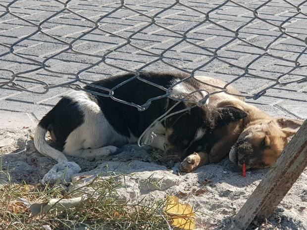 Animal welfare activists express outrage over 'dog poisoning' deaths